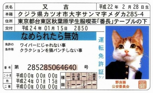 Tsukasa,60-75