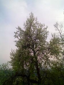 Јовица,25-39