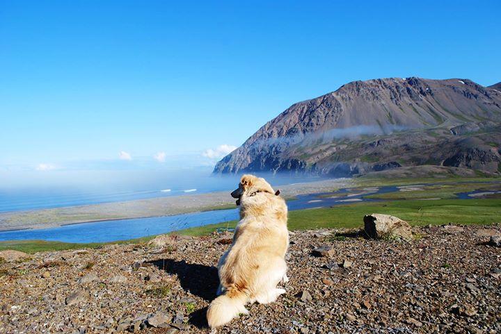 Hallur, Мужчина из Исландии, Akureyri